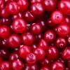Jornal Especial abril/2013: alimentos especiais para prevenção de doenças